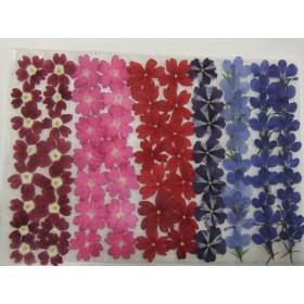 新春sale 再販 押し花素材 バーベナ ロベリア ️