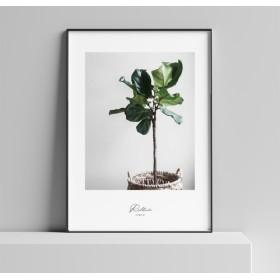 040 interior poster: plant life