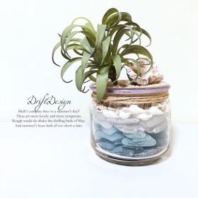 造花と貝殻のお洒落なシーグラスの瓶詰め 西海岸 ロンハーマン ブルー