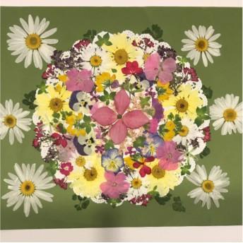 押し花☆マーガレット、ゲラニウム、ビオラ、ヤマボウシ他小花たくさん 花材