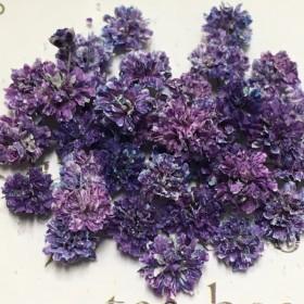 かすみ草 ドライフラワー 混色 purple blue mix gradation