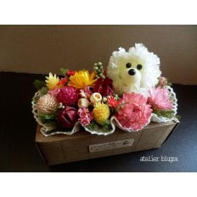 八ヶ岳〜Square box・Poodle Ver.4