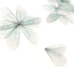 5枚 約8cm 素材 羽パーツ グリーン 蝶々パーツ シフォン ちょうちょ 羽根PGH3