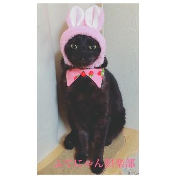 いちご柄襟付き猫ちゃんの首輪