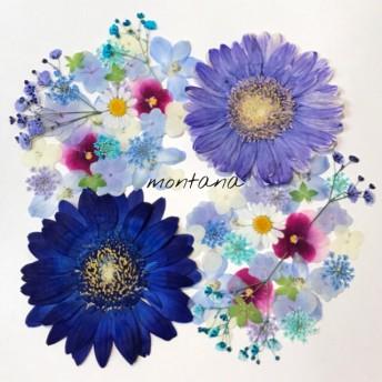 258.押し花アソート〜ブルー系 パープル系 ビオラ 小花mix 押し花素材