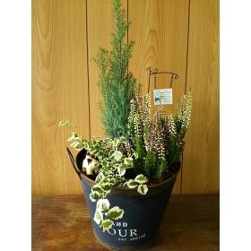 お買い得品♪季節の観葉植物 寄せ植え アンティークブリキポットに♪プレゼント インテリア グリーン 癒し ガーデン 寄せ植え リフレッシュ 多肉植物 動物 お花 花 フラワー