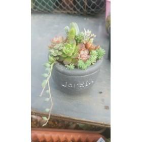 ミニグレー鉢多肉植物寄せ植え