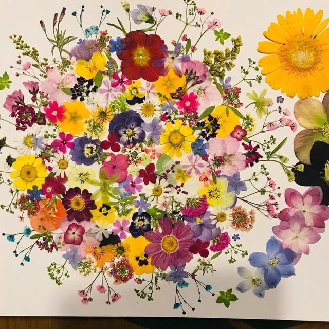 押し花☆クリサンセマム、かすみ草、ガーベラ他 小花MIXたくさん 花材 素材