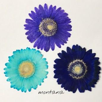 ブルー系 ガーベラ 3枚セット 押し花素材