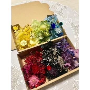 6カラー揃うチーゼルフラワー*ハーバリウム 花材ドライフラワー 花材セット