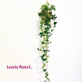 長〜い!シュガーバイン ハンギングポーチ仕立て 観葉植物 インテリア 壁掛け(No.49)
