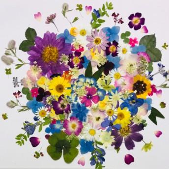 押し花☆ミニバラ、フロックス、アジサ他小花たくさん 花材 おまけ付き