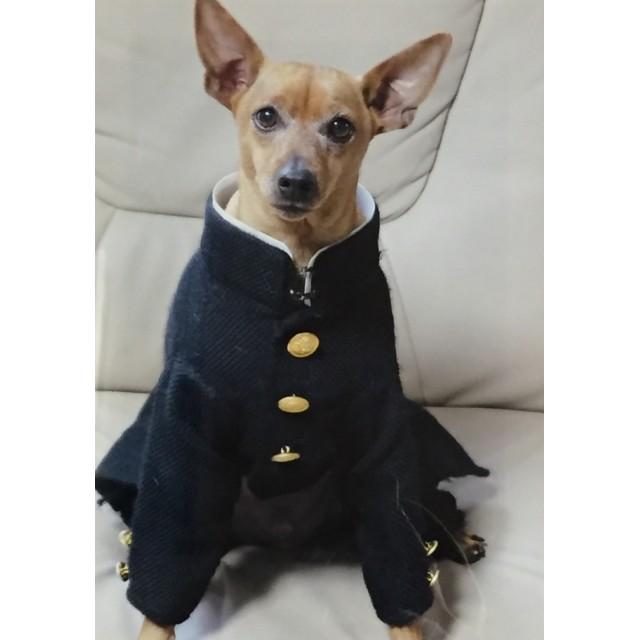 犬服 学生服