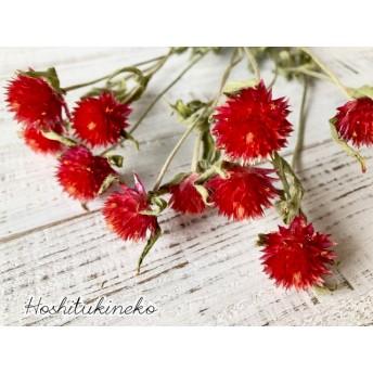 星月猫★千日紅 ストロベリーフィールド 赤レッド10本 ドライフラワー花材 ハーバリウムやボタニカルキャンドル そのままインテリアおすすめ