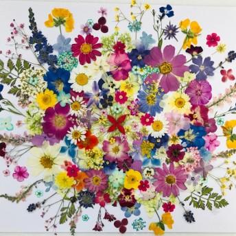 押し花花材 素材☆マーガレット、コスモス、ビオラ、アジサイ他小花MIX たくさん