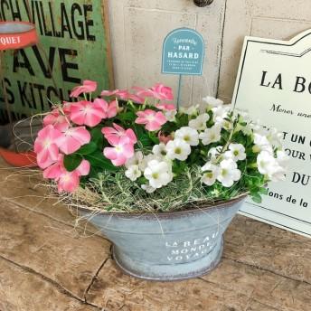 新作 現品のみ【ナツザクラ日々草&カリブラコア 寄せ植え】可愛いお花ガーデニング シルバー系ブリキ鉢♪