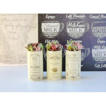 プチ多肉植物_リメ缶寄せ植え3個セット