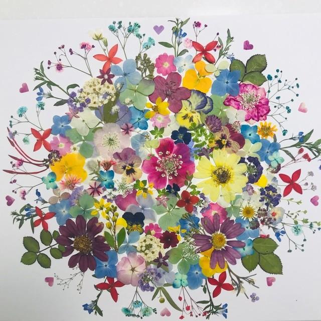 押し花☆かすみ草、ジニア、アジサイ他 小花たくさん 花材 素材