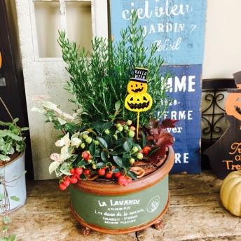 新作 【ローズマリー入り 秋冬寄せ植え】人気のガーデニング アンティーク風 深緑ブリキ鉢