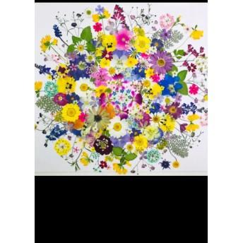 押し花 花材 素材☆ニチニチ草、ビオラ、コデマリ、クリサンセマム他 小花たくさん