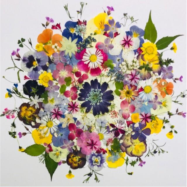 押し花☆アジサイ他小花たくさん おまけいっぱい 花材