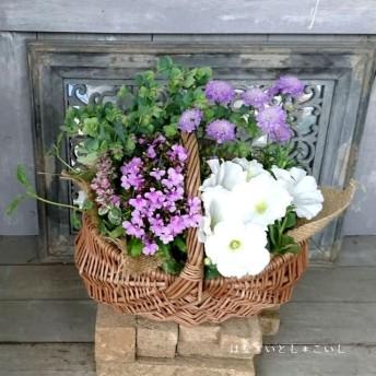 【寄せ植え 124】 母の日の贈りものに☆ペチュニアとスカビオサの寄せ植え