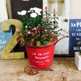 新作 現品【赤ブリキ 寄せ植え】可愛いお花ガーデニング♪八重咲きマーガレット入り