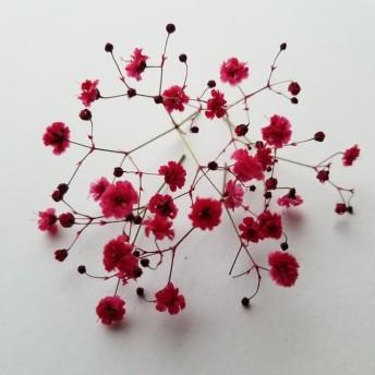 霞み草のドライフラワー 赤