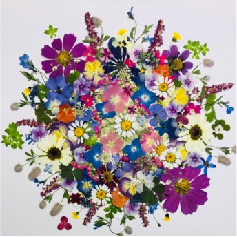 押し花☆マーガレット、フロックス、紫陽花他小花たくさん 花材