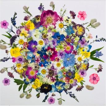 押し花☆フロックス、紫陽花、レースフラワー他小花たくさん 花材