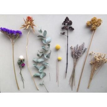 ドライフラワー10種/ラベンダーユーカリ紫陽花ミニバラクラスペディアいろいろセット