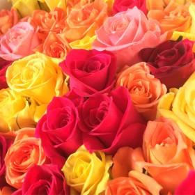 【再販】〜レアな色味も!~バラのドライフラワー