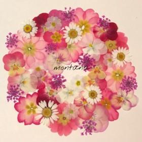 327.押し花アソート〜ピンク系 ビオラ ジュリアン 小花 mix 押し花素材