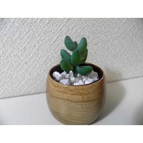 木のミニ植木鉢 コナラ7.8cmΦ