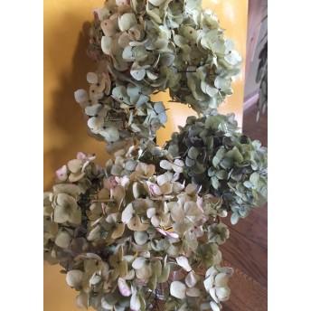 お花屋さんが作った秋色紫陽花 Bランク品の3本セット 5