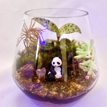 【苔テラリウム】キラキラ植物とパンダの庭