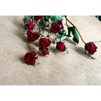 10輪束 スプレー ミニ薔薇 ロイヤルレッドd