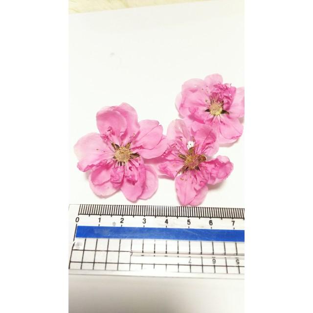 【限定】大きな桃の花のドライフラワー