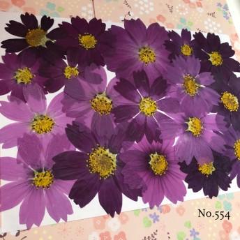 new 作家様必見 可愛いコスモスお花がいっぱい 押し花セット