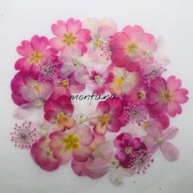 367.押し花アソート〜ピンク系 ビオラ 小花 mix 押し花素材