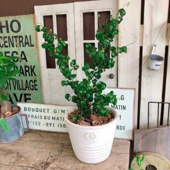 新作 現品【バロック】陶器鉢!人気のグリーン すてきな観葉植物!シンプル植物インテリア