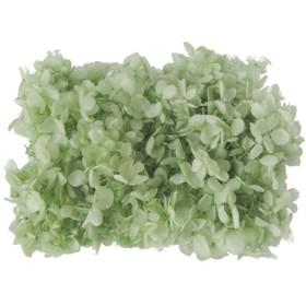 約2g おすそ分け クリアグリーン 緑 紫陽花・あじさい プリザーブドフラワー 仕入れ時から細かいキズ、花びらなどに透け、切れ、折れなどがある物もございます。天然素材の特徴とどうぞご理解ください。