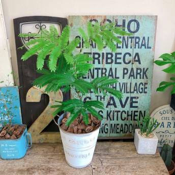 新作 爽やかグリーン【エバーフレッシュ】♪人気の観葉植物 白系ブリキ鉢