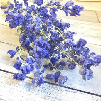 お花屋さんのドライフラワー・単品売り「デルフィニウム」