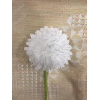 ピンポンマム ホワイト(3本セット)