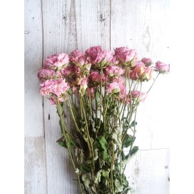 ピンクのスプレー薔薇3本のドライフラワー!Atelier kouan