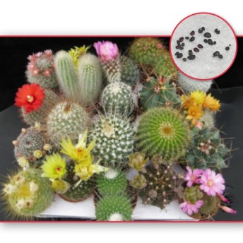 種子20粒 サボテンミックス 多肉植物
