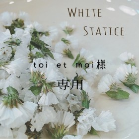 スターチス ドライフラワー 白