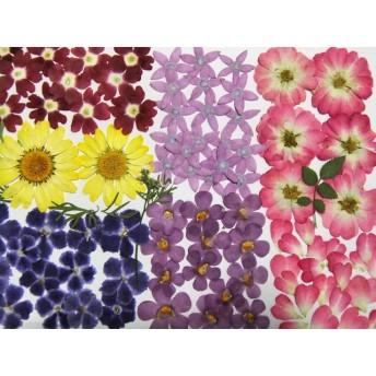 押し花素材 お花いろいろ 2 ️