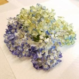 【花材】 紫陽花 立体ドライフラワー